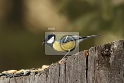 """Постер Птицы """"Постер 60527132"""", 30x20 см, на бумаге от Artwall"""
