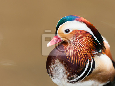 """Постер Птицы """"Постер 60539953"""", 27x20 см, на бумаге от Artwall"""