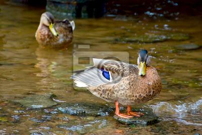 """Постер Птицы """"Постер 60637346"""", 30x20 см, на бумаге от Artwall"""