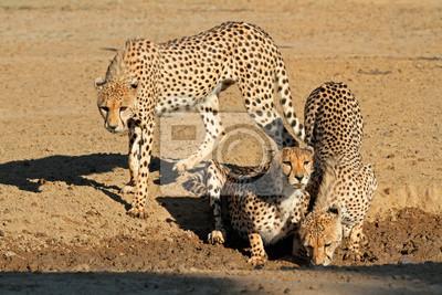 """Постер Животные """"Постер 60671837"""", 30x20 см, на бумаге от Artwall"""