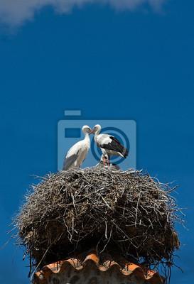 """Постер Птицы """"Постер 60701496"""", 20x29 см, на бумаге от Artwall"""