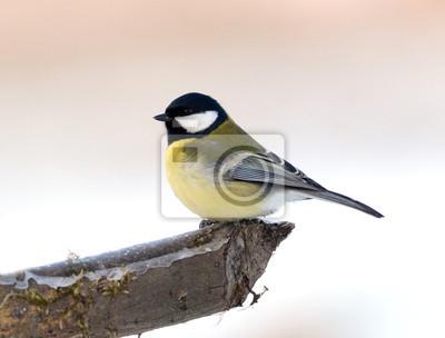 """Постер Птицы """"Постер 60730509"""", 26x20 см, на бумаге от Artwall"""