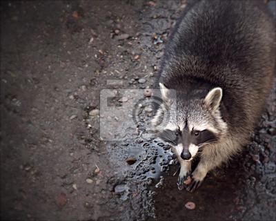 """Постер Животные """"Постер 60787286"""", 25x20 см, на бумаге от Artwall"""