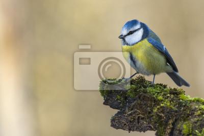 """Постер Птицы """"Постер 60799022"""", 30x20 см, на бумаге от Artwall"""