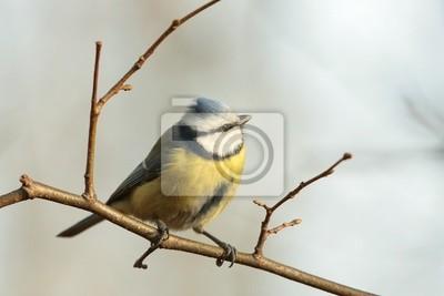 """Постер Птицы """"Постер 60958236"""", 30x20 см, на бумаге от Artwall"""