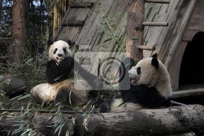 """Постер Животные """"Постер 65060281"""", 30x20 см, на бумаге от Artwall"""
