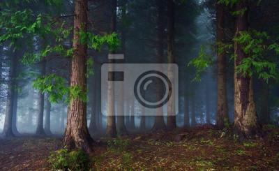 "Постер Природа ""Постер 81344837"", 33x20 см, на бумаге от Artwall"