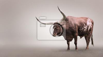 """Постер Животные """"Постер 98293861"""", 36x20 см, на бумаге от Artwall"""