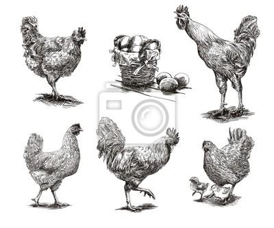 """Постер Птицы """"Постер 99811708"""", 24x20 см, на бумаге от Artwall"""