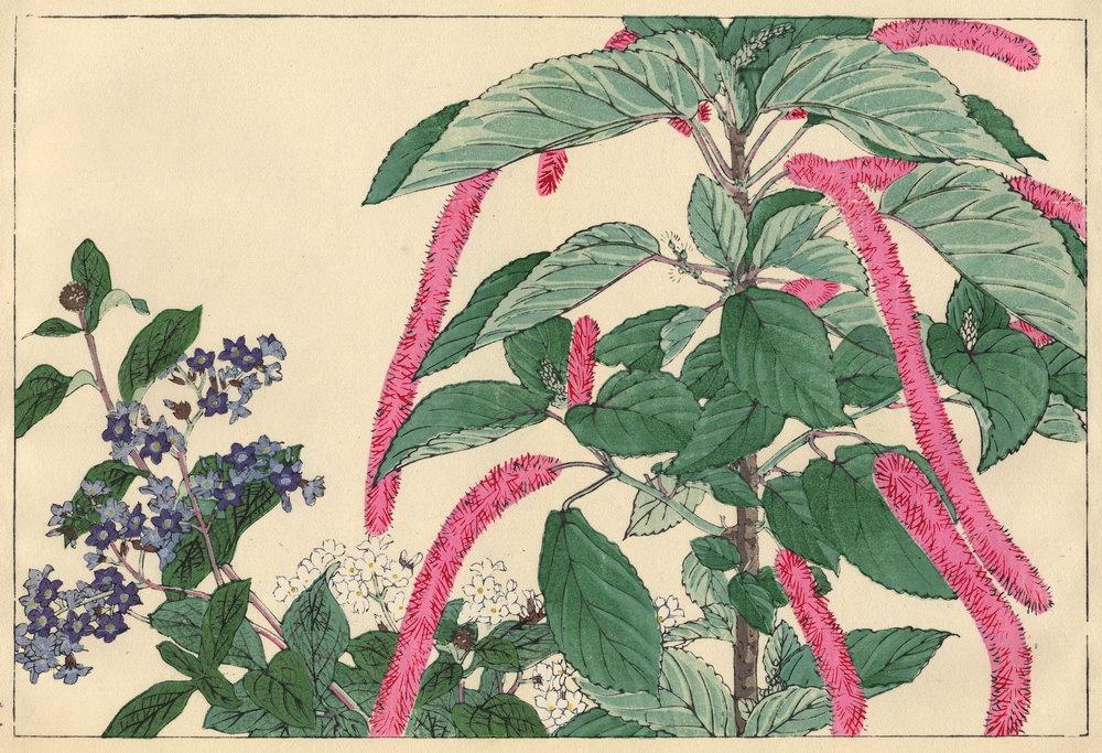 "Искусство, картина ""Танигами Конан «Гелиотроп и акалифа»"", 29x20 см, на бумаге от Artwall"