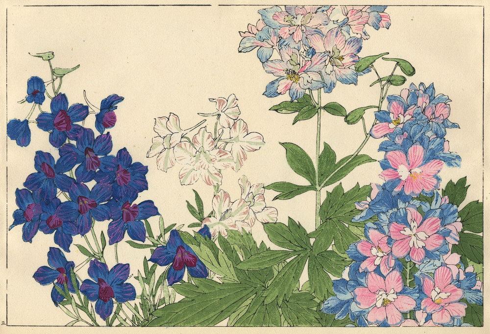 """Искусство, картина """"Танигами Конан «Дельфиниум»"""", 29x20 см, на бумаге от Artwall"""