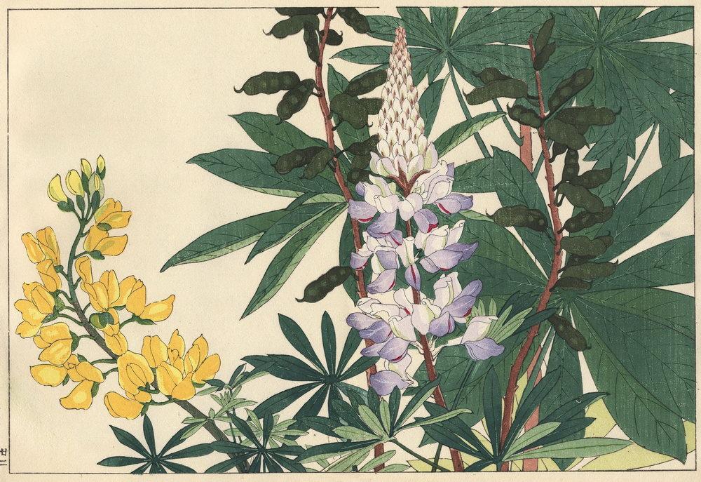 """Искусство, картина """"Танигами Конан «Люпин»"""", 29x20 см, на бумаге от Artwall"""