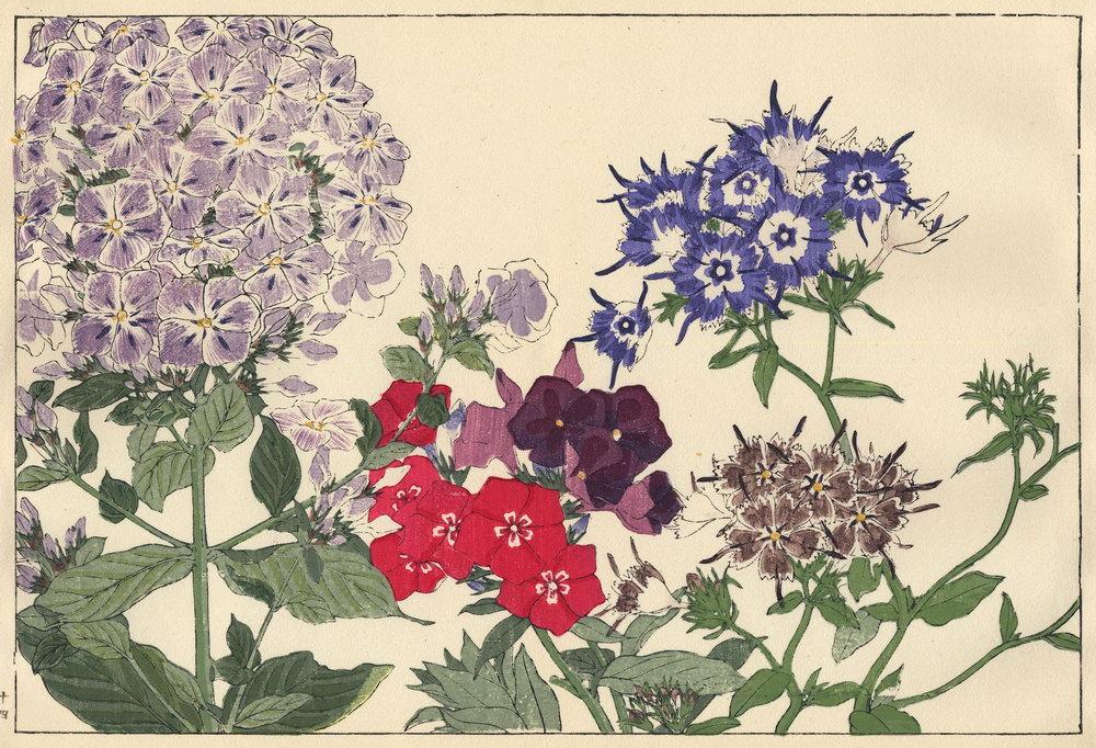 """Искусство, картина """"Танигами Конан «Флоксы»"""", 29x20 см, на бумаге от Artwall"""