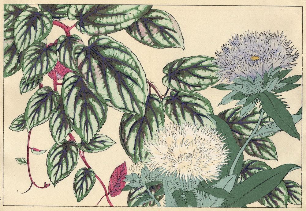 """Искусство, картина """"Танигами Конан «Стокезия»"""", 29x20 см, на бумаге от Artwall"""