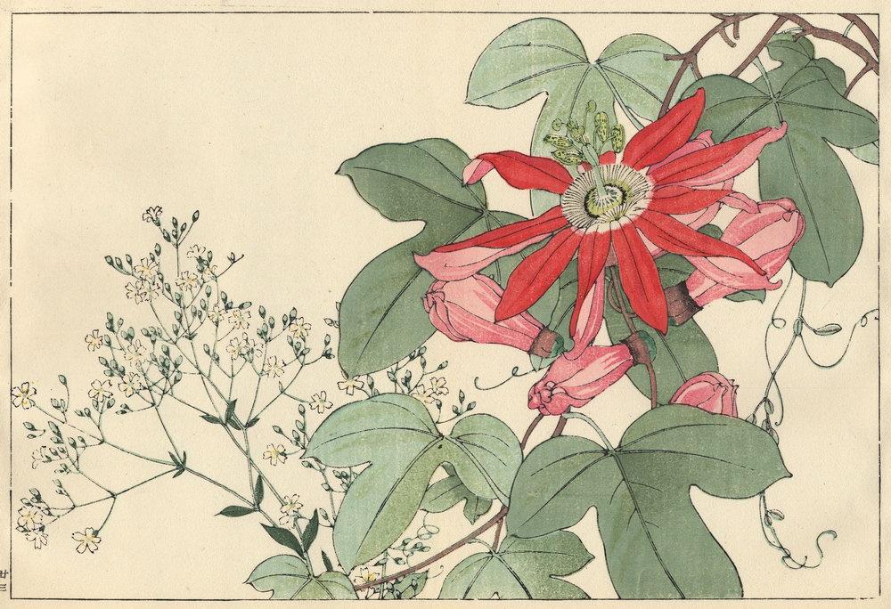 """Искусство, картина """"Танигами Конан «Качим и страстоцвет»"""", 29x20 см, на бумаге от Artwall"""
