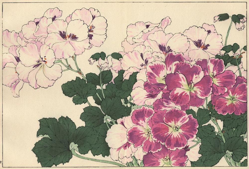 """Искусство, картина """"Танигами Конан «Герань (Пеларгония)»"""", 29x20 см, на бумаге от Artwall"""