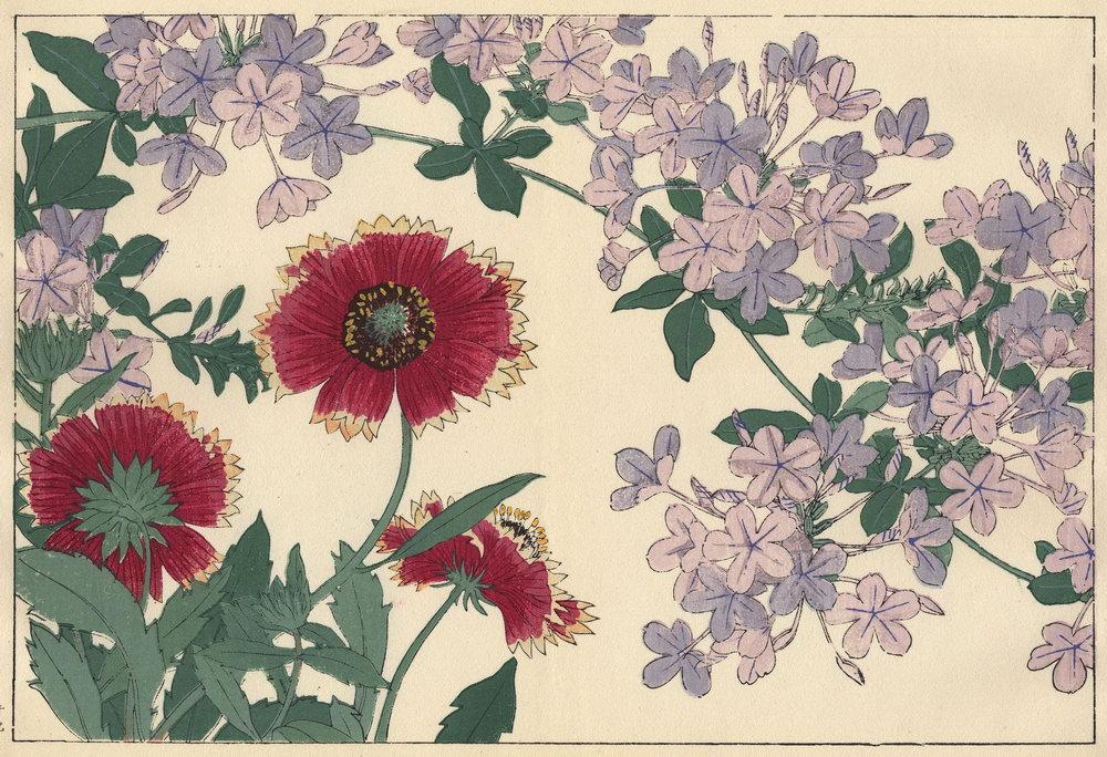 "Искусство, картина ""Танигами Конан «Гайллардия и свинчатка»"", 29x20 см, на бумаге от Artwall"