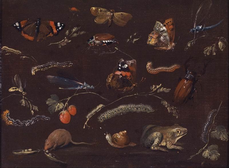 """Искусство, картина """"Лаунбург Йохан Дитрих Финдорф, Изучение разнообразия маленьких животных"""", 27x20 см, на бумаге от Artwall"""