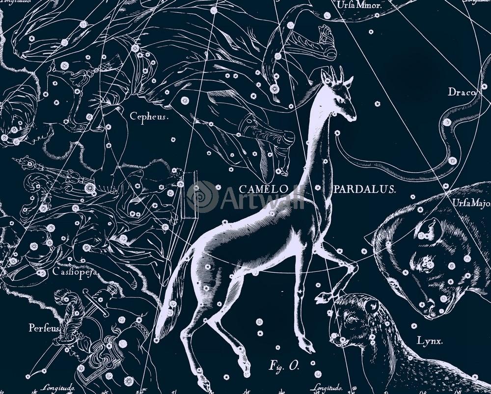 """Постер Космос """"Camelopardalus - Жираф"""", 25x20 см, на бумаге от Artwall"""