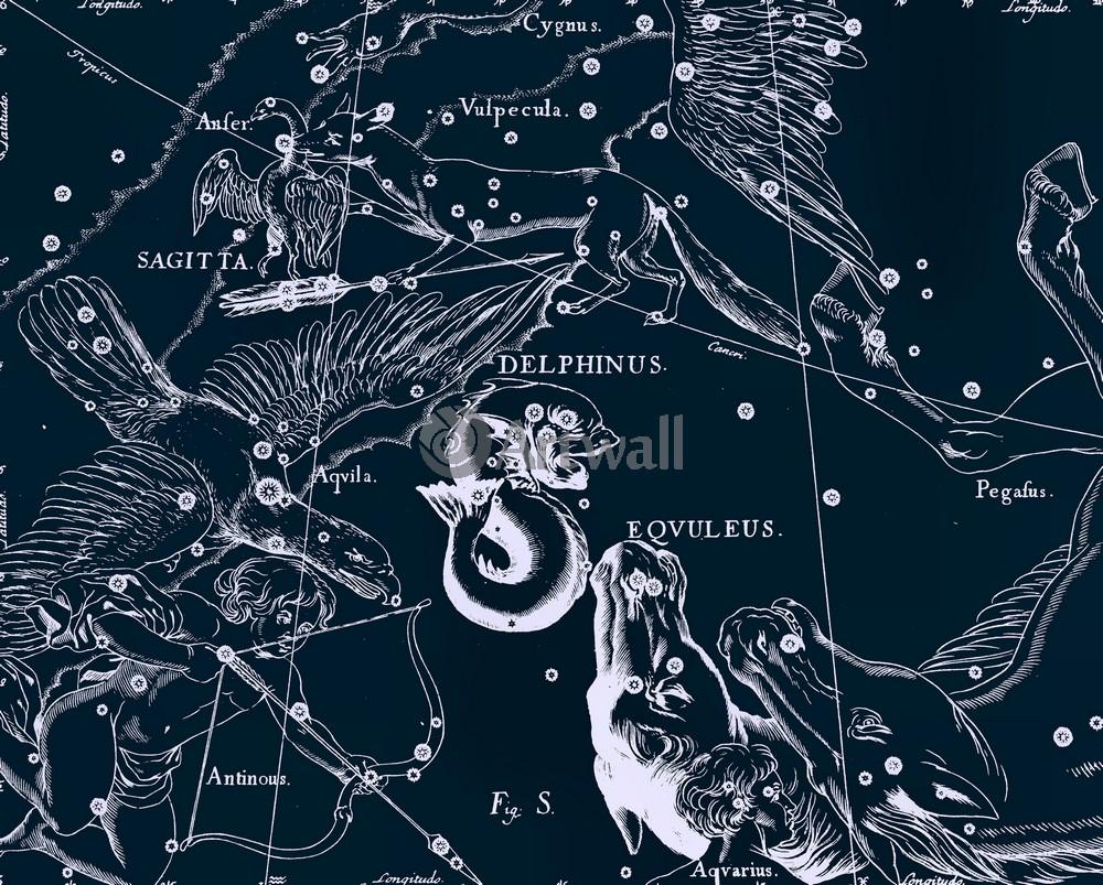 """Постер Космос """"Delphinus, Eqvuleus - Дельфин, Жеребенок (Малый Конь)"""", 25x20 см, на бумаге от Artwall"""