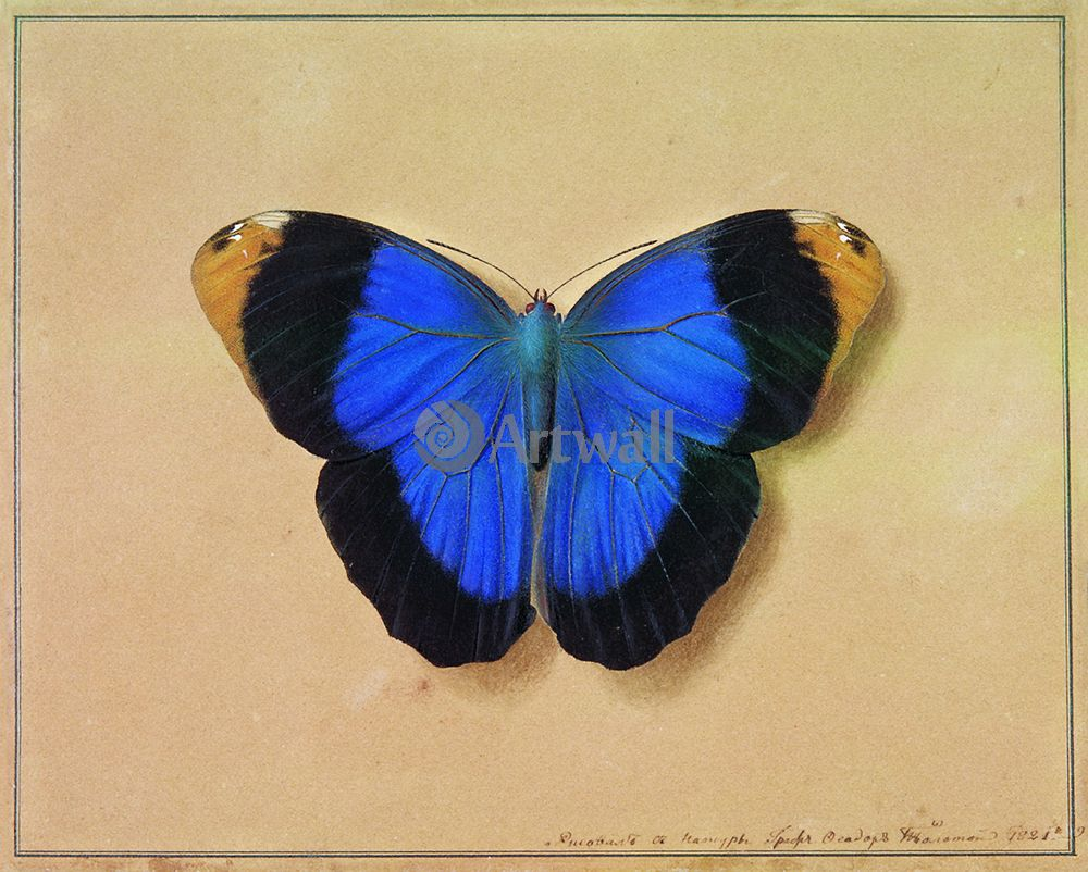 "Художники, картина ""Бабочка"", 25x20 см, на бумаге от Artwall"