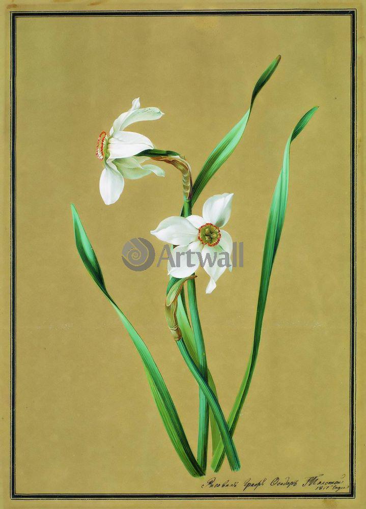 """Художники, картина """"Нарцисс"""", 20x28 см, на бумаге от Artwall"""