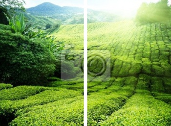 Модульное панно Чайная плантация Cameron highlands, Малайзия, Малайзия