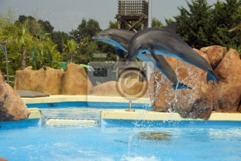Dauphins_1,