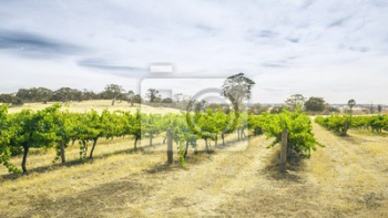 Barossa Valley,