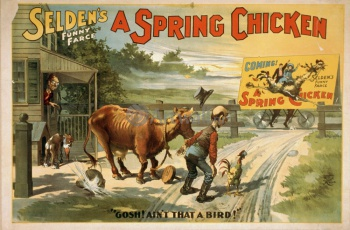 Selden's Funny Farce, A Spring Chicken,